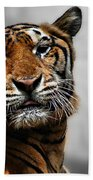 A Tiger's Look Hand Towel