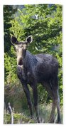 A Young Moose  Bath Towel