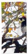 Acorn Woodpecker In Tree  In Park Sierra-ca Bath Towel