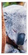 Adorable Koala Bear Taking A Nap Sleeping On A Tree Bath Towel