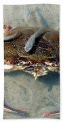Adult Male Blue Crab Bath Towel