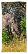 African Bush Elephant Bath Towel