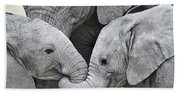 African Elephant Calves Loxodonta Bath Towel