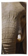 African Elephant Close Up Amboseli Bath Towel