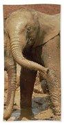 African Elephant Orphans Playing In Mud Bath Towel