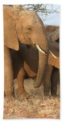 African Elephants Bath Towel