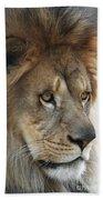 African Lion #8 Bath Towel