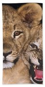 African Lion Cubs One Aint Happy Wldlife Rescue Bath Towel