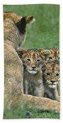 African Lion Cubs Study The Photographer Tanzania Bath Towel