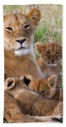 African Lioness And Young Cubs Bath Towel