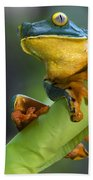 Agalychnis Calcarifer 4 Bath Towel