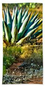 Agave In Secret Mountain Wilderness West Of Sedona Hand Towel
