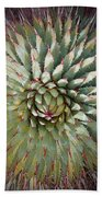 Agave Spikes Hand Towel