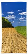 Agricultural Landscape - Young Corn Field Bath Towel