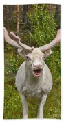 Albino Reindeer Hand Towel