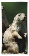 Alert Black-tailed Prairie Dogs Bath Towel