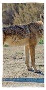 Alert Coyote Bath Towel