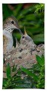 Allens Hummingbird Feeds Young Bath Towel