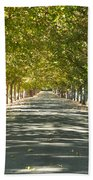Alley Of Trees On A Summer Day Bath Towel