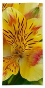 Alstroemerias Flower 1 Bath Towel