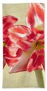 Amaryllis Red Bath Towel