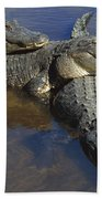 American Alligators In Shallows Florida Bath Towel