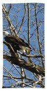 American Bald Eagle In Illinois Bath Towel