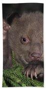 American Black Bear Cub Wildlife Rescue Bath Towel