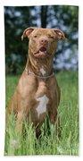 American Pit Bull Terrier Bath Towel
