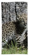 Amur Leopard Cub Antics Bath Towel