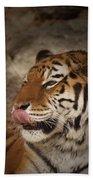Amur Tiger 3 Bath Towel