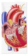 Anatomy Of Human Heart, Cross Section Bath Towel