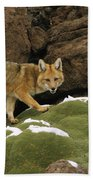Andean Red Fox Altiplano Bolivia Bath Towel