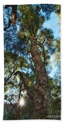 Angeles Sun -beautiful Tree With Sunburst In Angeles National Forest In The San Gabriel Mountails Bath Towel