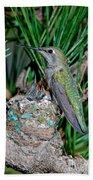 Annas Hummingbird With Young Bath Towel
