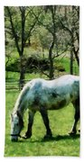 Appaloosa In Pasture Bath Towel