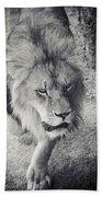Approaching Lion Bath Towel