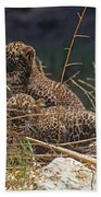 Arabian Leopard Panthera Pardus Cubs Bath Towel