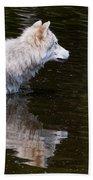 Arctic Wolf In Pond Bath Towel