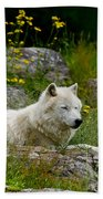 Arctic Wolf Pictures 1128 Bath Towel
