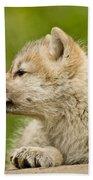 Arctic Wolf Pictures 340 Bath Towel