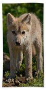 Arctic Wolf Pictures 345 Bath Towel