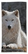 Arctic Wolf Pictures 518 Bath Towel