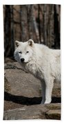 Arctic Wolf Pictures 512 Bath Towel