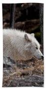 Arctic Wolf Pictures 541 Bath Towel