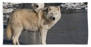 Arctic Wolf Pictures 812 Bath Towel