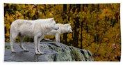 Arctic Wolf Pictures 930 Bath Towel