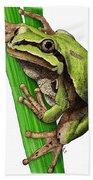 Arizona Tree Frog Bath Towel
