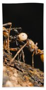 Army Ant Carrying Cricket La Selva Bath Towel
