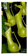 Asian Pitcher Plant Bath Towel